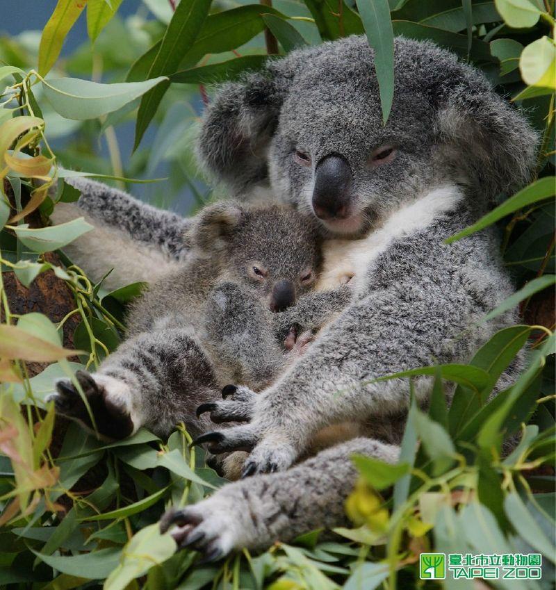 5 podróżniczych celów Australia